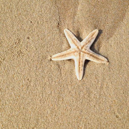 Star Starfish