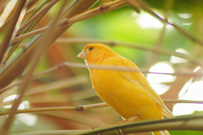 Portrait of a bird Bird Animal Themes Animal Vertebrate Perching Animal Wildlife One Animal Animals In The Wild Close-up Yellow Plant No People Day Branch Nature Outdoors Focus On Foreground Tree Selective Focus Beauty In Nature