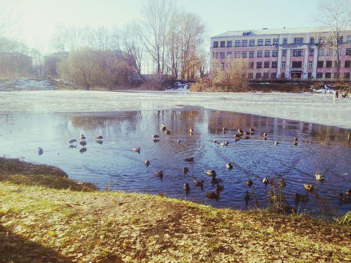 Ducks Pond Park