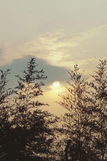 Sunset Cloud - Sky Silhouette Sun Nature