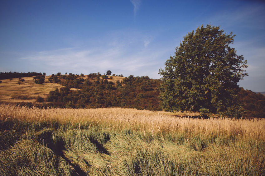 Agriculture Autumn Autumn Colors Beauty In Nature Blue Sky White Clouds Countryside Nature's Diversities Dry Grass Farm Field Grass Grassy Hay Hill The Great Outdoors - 2016 EyeEm Awards The Great Outdoors With Adobe Landscape Majestic Meadow Outdoors Remote Rural Scene Tranquil Scene Tranquility Tree