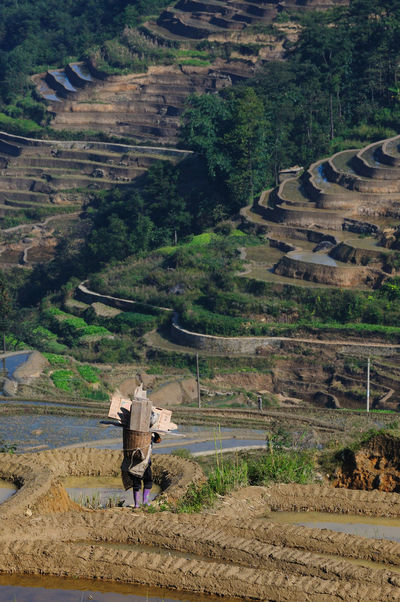 Agriculture China Day Escapism Farm Farming High Angle View Rural Scene Step Farming Stepfarming Steps Terraced Field Terraced Rice Fields
