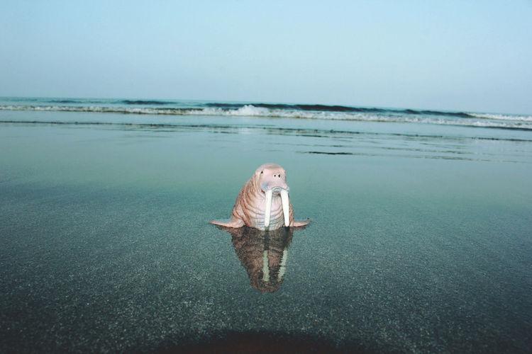 View of walrus miniature on calm beach against clear sky