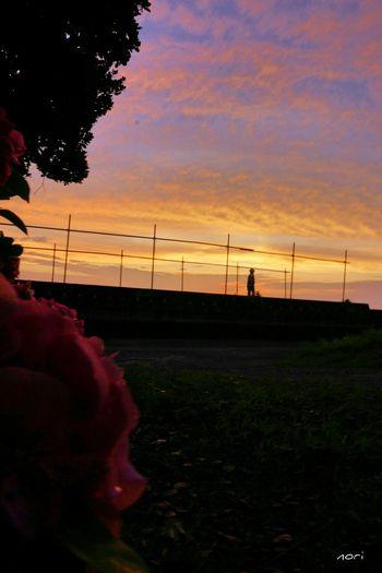君が見ていた いつかの空 、僕は君を見ていた… 夕暮れふぇち 妄想ふぇち ボケ味ふぇち マジックアワー Sunset_collection Sky_collection Clouds And Sky Imagination Kagoshima