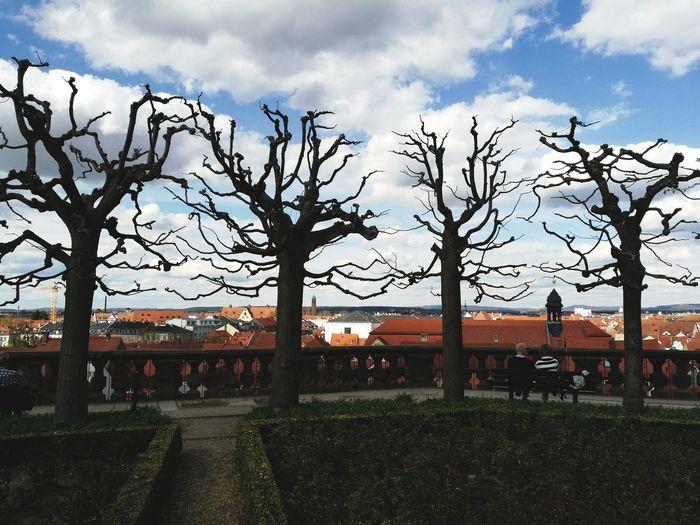 Rosengarten Bamberg  Grass Tranquility Calm Growing Tranquil Scene