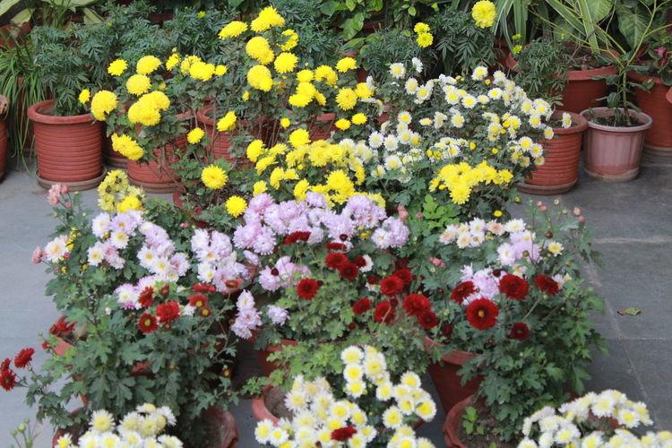 Fresh flowers in pot