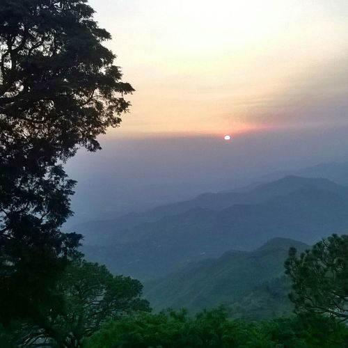 Tree Nature Sunset Sky Travel Tranquility Morning Beauty In Nature Landscape Sunset Sunsets Scenics Outdoors Forest Fog Vacations Milky Way No People Mountain Lush - Description Green Photography Nature Travel Night Perspectives On Nature
