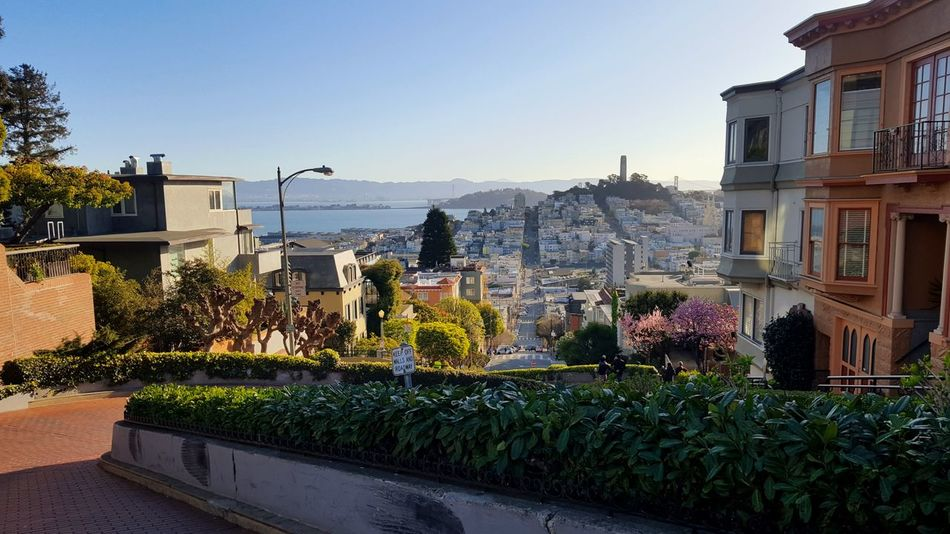 Frisco. Lombard Street San Francisco Frisco Architecture Travel Destinations Building Exterior Outdoors Day No People Vacations Built Structure Cityscape City Clear Sky Sky Water