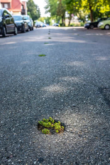 Hope Asphalt City Close-up Day Direction Flower Flowering Plant Focus On Foreground Green Color Growth Leaf Nature No People Outdoors Plant Plant Part Road Street The Way Forward Transportation Will To Survive
