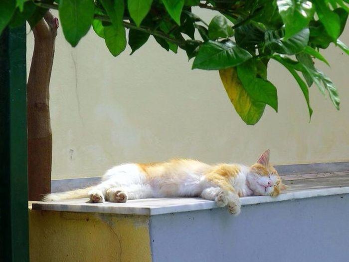 Cat yawning lying on floor