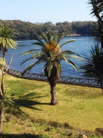 Walking In The Park By The Sea Earlyspring Morning Palm Tree Tree Growth Nature Beauty In Nature Scenics Grass Sky Tranquil Scene Outdoors Tree Trunk No People Tranquility Landscape Single Tree Day Water Palm Frond Saikai City Japan