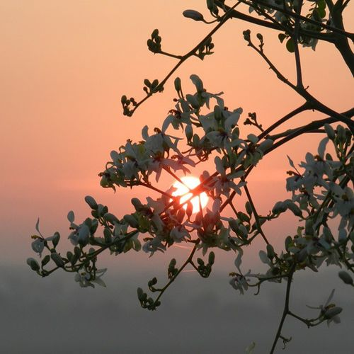 Sun Lovesun Sunset Flowers Leaves Nikon Nofiltering
