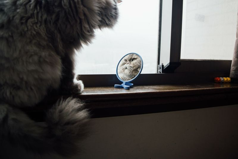 Cat in the mirror. One Animal Indoors  Pets No People Domestic Animals Close-up Day Animal Themes