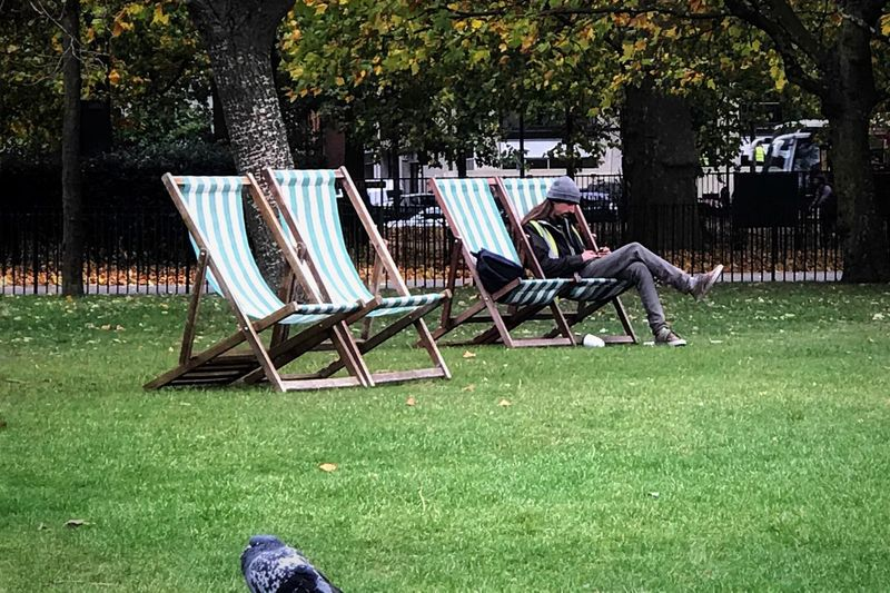 Grass Chair Relaxation Folding Chair Tree Outdoor Chair Lawn Nature Outdoors Seat Day Tranquility Leisure Activity Beauty In Nature Sitting One Person People Pigeon The Solitary Pigeon