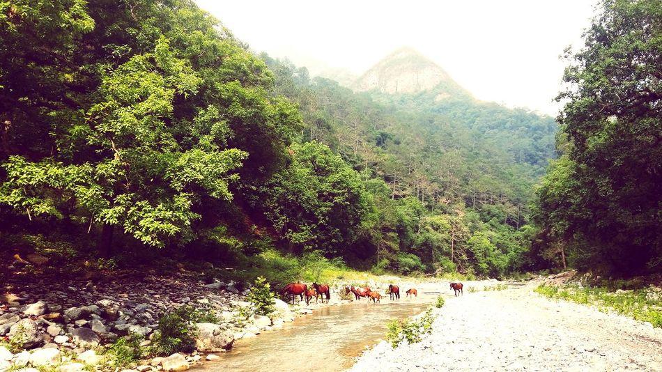 Rio Ramos, Las Adjuntas RíoRamos Las Adjuntas Chipitin Jeeping Jeepeando Trailing Camping Nuevo Leon SantiagoNL Wildlife Mexico Vive_mexico