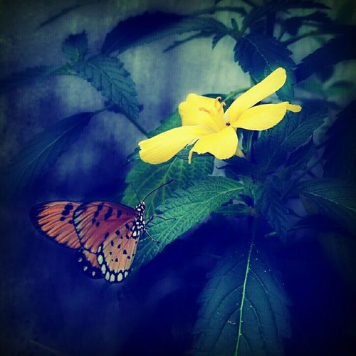 Butterfly ❤ Garden Photography Honey Flowers, Nature And Beauty