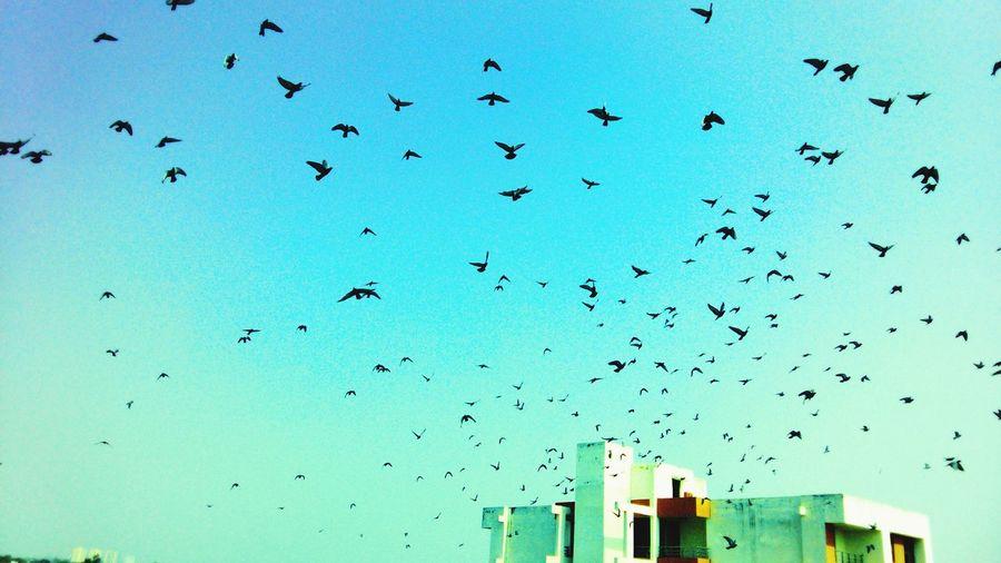 I wna fly freely like d birds First Eyeem Photo