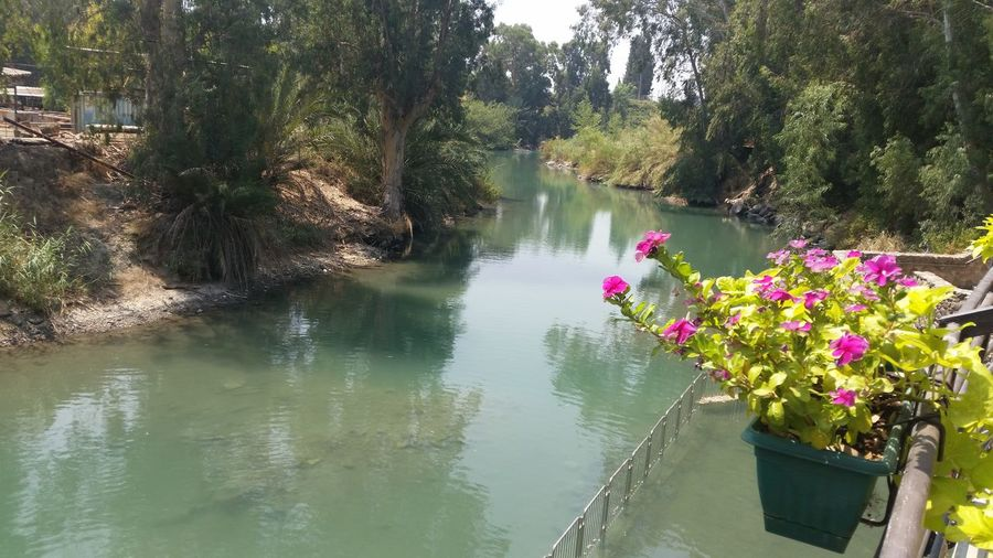 baptismal site Jordan river River Jordan Israel Water Plant Beauty In Nature Nature Tree Tranquility Flowering Plant Day Tranquil Scene Flower Reflection Scenics - Nature Growth Pink Color No People Outdoors Non-urban Scene Floating On Water Yardenit