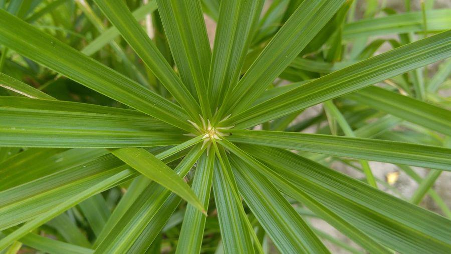 Flower Leaf Full Frame Close-up Plant Green Color Plant Life Botany