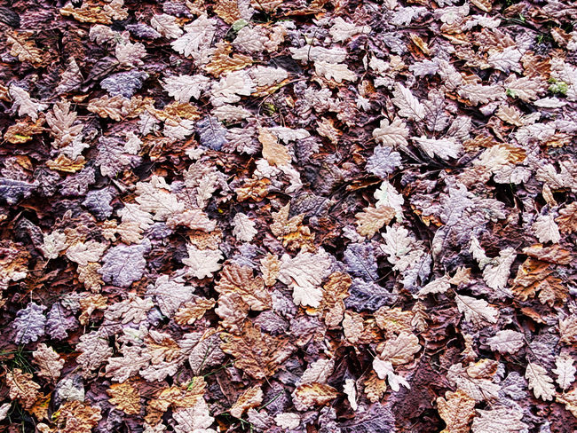 Autumn Backgrounds Fall Leaves Natural Pattern Texture Textured  WoodLand