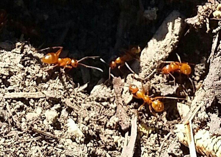 Ants Micro