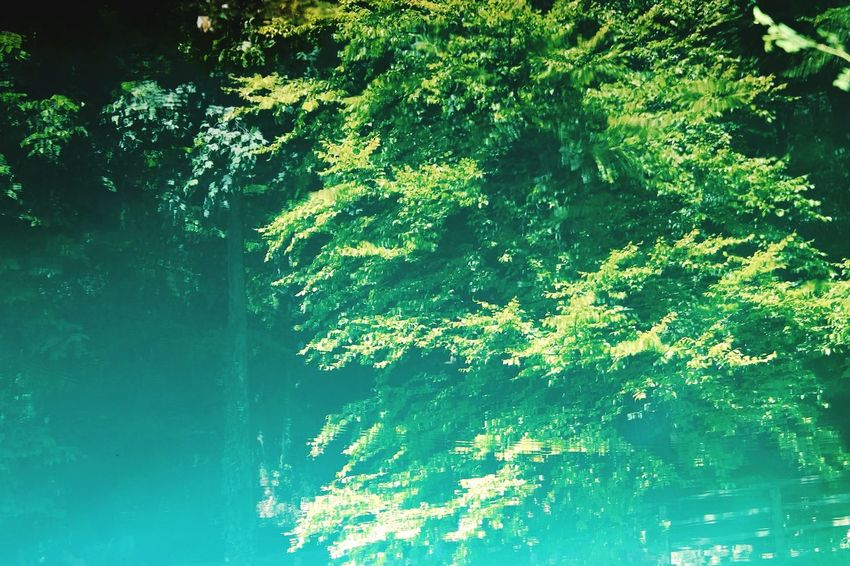 Blautopf Nature Photography Beauty In Nature My Point Of View Blautopf Blaubeuren Turquoise Turquoise Water Water Tree Reflection Leaf Branch Close-up Green Color Calm