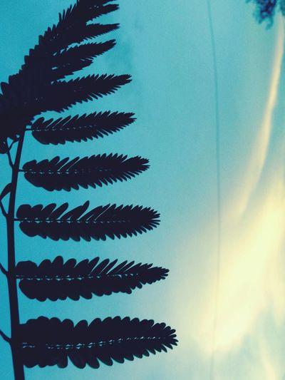 Naturetrees