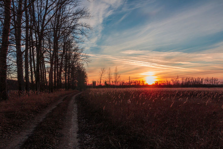 Dirt road amidst trees on field against sky at sunset