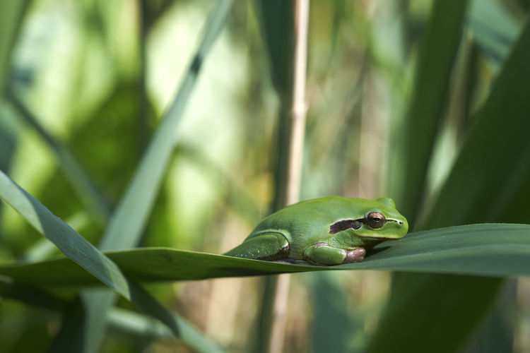 Close-up of green lizard on leaf