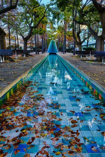 Autumn leaves floating on water in park