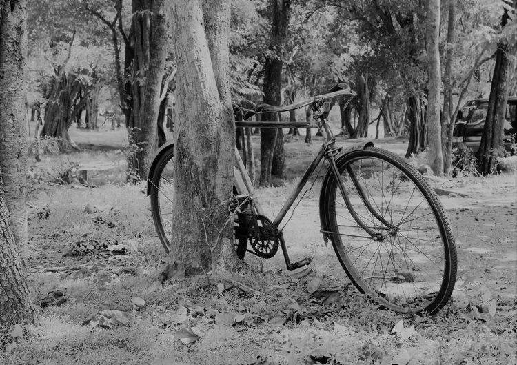 Animal Themes Beauty In Nature Bicycle Day Land Vehicle Mammal Mode Of Transport Nature No People Outdoors Transportation Tree Tree Trunk