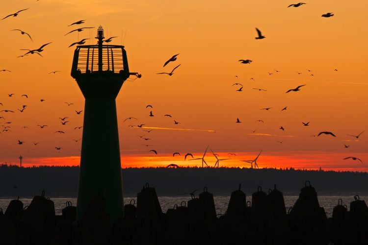 Sunset Silhouette Orange Color Bird Sky No People Outdoors Romantic Sky Large Group Of Animals Nature Beauty In Nature