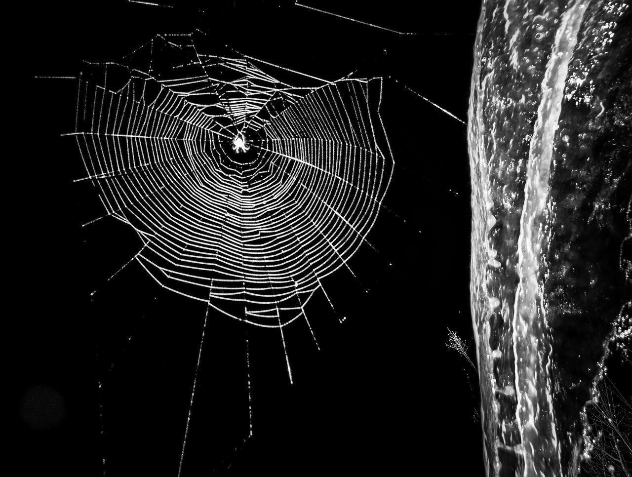 CLOSE-UP OF SPIDER WEB OVER BLACK BACKGROUND