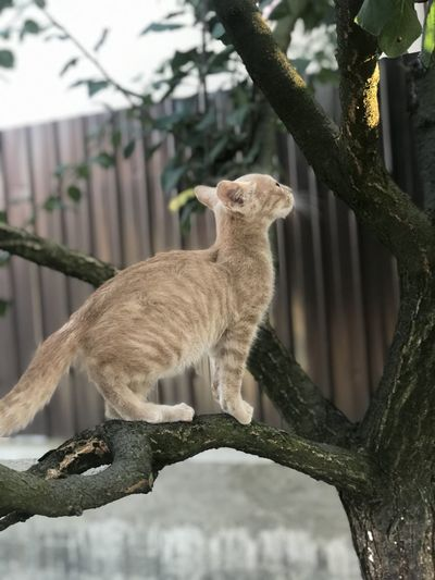View of a cat on branch