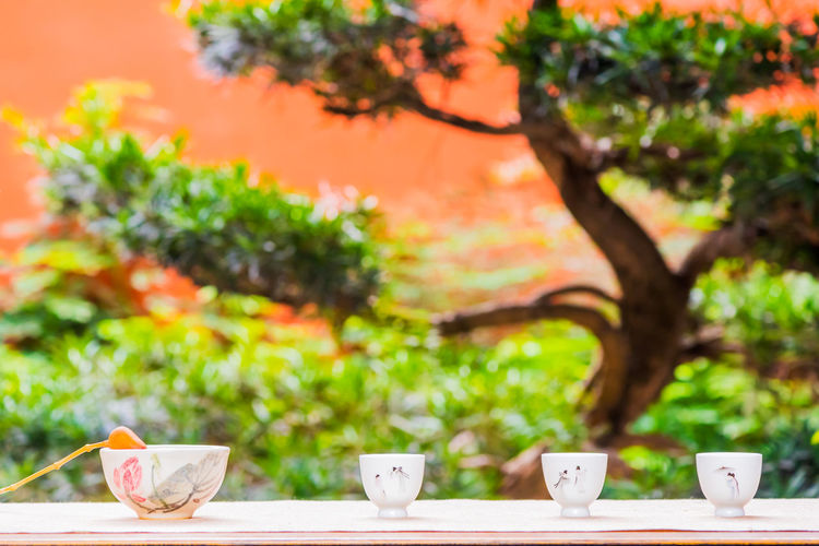 Bowl and cups on table against tree