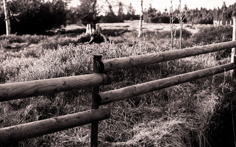 """Fency"" Outdoors Day Field Nature No People Rural Scene Tree Grass Nature Beauty In Nature Blackforest Ruhestein Hiking Wood Monochrome Blackandwhite Fence Trail"