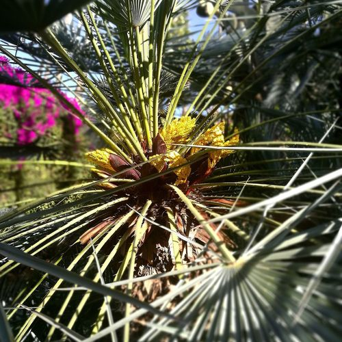 Marrakech Majorelle Palma Close-up No People Tree Outdoors Nature Day Beauty In Nature Freshness