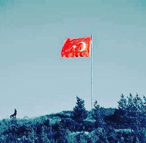 Kan dökmeyi seven bir millet degiliz,ancak söz konusu vatan ise Dunyanin Sah DAMARINI Keseriz . Vatan Bayrak Millet