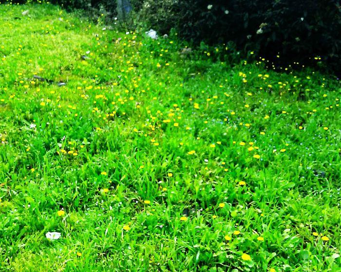 Boterbloem Flowers Springtime Spring Flowers Spring Has Arrived Spring Is Coming  EyeEm Best Shots EyeEm Nature Lover EyeEm Best Shots - Nature EyeEm Flower Green Color Green Green Green!  Green Nature Green Showcase March