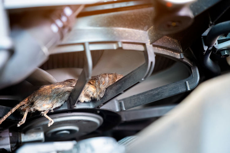Auto mechanic clean dirty air fan form mouse.It try collect garbage to build rat's nest in car. technician repairs problem Selective Focus Close-up No People Day Animal Healthy Eating Transportation Preparation  Animal Body Part Rat Engine Auto Car
