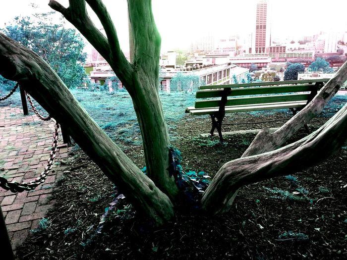 Peridot TreePorn Streetphotography TheMaximums (more Edit Juxt Photography)