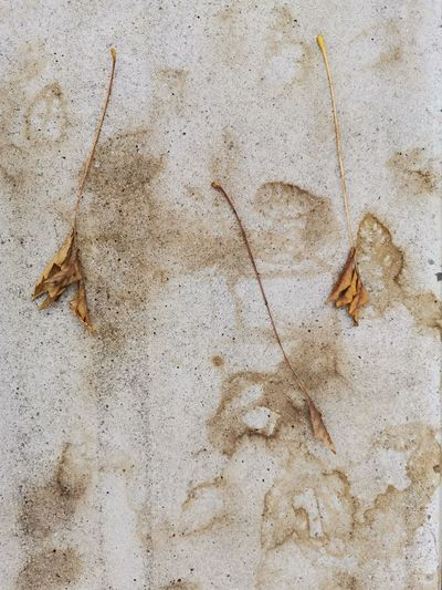 High angle view of dry leaf on concrete wall