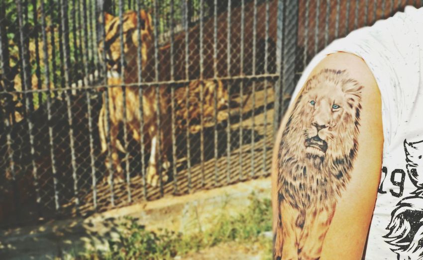 Tatoo Tatto Art Arm Tattoo Lion Zoo Cage Sunny Cool Animals Beast Varna Bulgaria