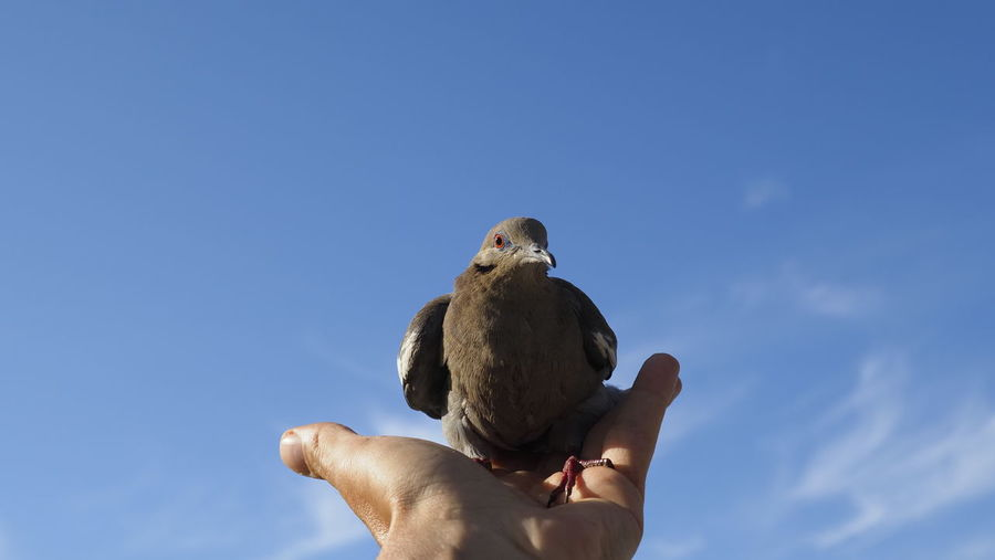 Low angle view of hand holding bird against sky
