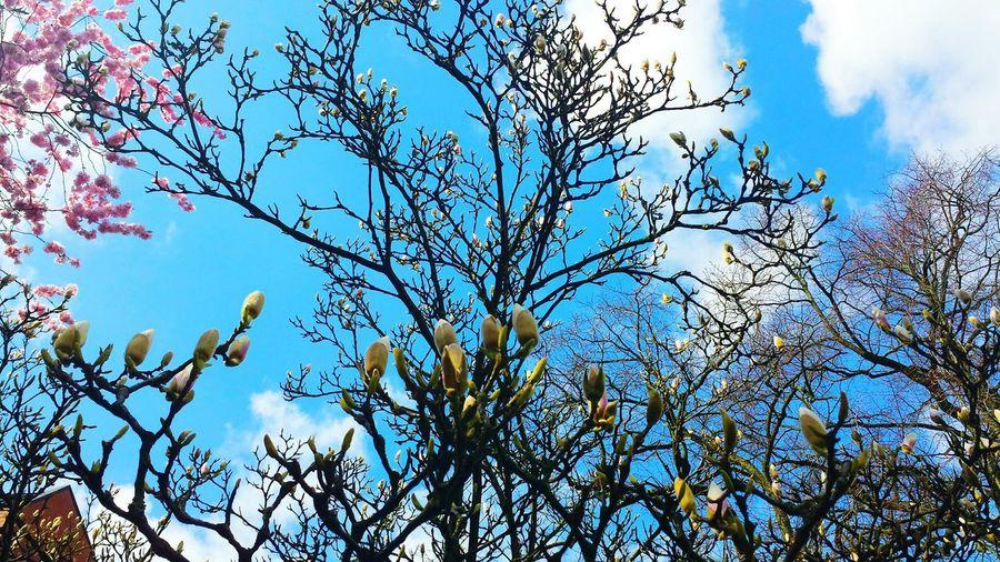 🌸 Cherryblossom Cherryblossoms Cherry Blossoms Magnolia Tree Magnolia Magnolia_Blossom Magnolia Flower Magnolia Blossoms Tree_collection  Tree Picoftheday #photooftheday #photography #iphonesia #pikturdis #WeAreTheCulture #jj_forum #webstagram #world #streetstyle #shootinupny #statigram #randomfreshness #tbt #twitter #nycphotography #nyc #les #igdaily #everybodystreet #vsco #streetphotography #s Nature_collection Landscape_collection EyeEmNatureLover Beautiful Nature #rose #beauty #nature #flower #love #eyeem #sun Beautiful Tree Beautiful Nature Naturephotography Nature_collection Nature_perfection Nature Photography Naturelover EyeEm Best Shots - Nature Eye4photography  Tagsforlikes Close-up Close Up