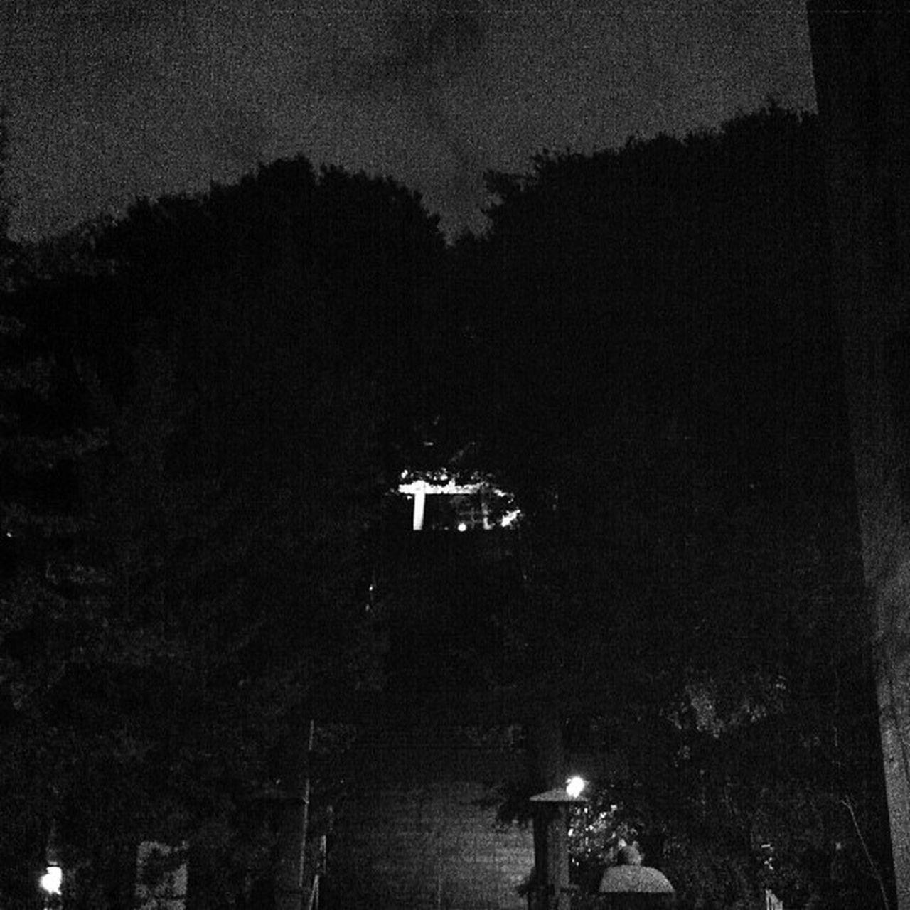 night, tree, illuminated, outdoors, no people, sky