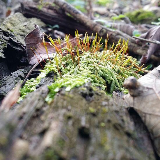 I love moss. Ilovemoss Moss