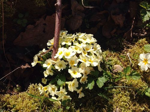 Spring Spring Flowers Flower