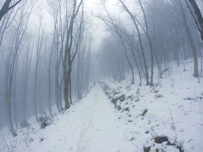 Snow Cold Temperature Nature Landscape Weather Winter Tree Outdoors Beauty In Nature Mist