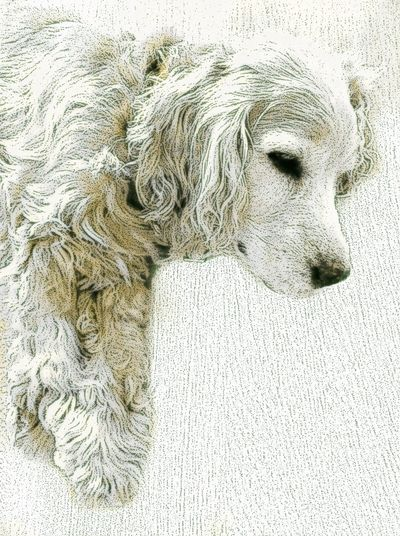 Sparko Max. 40 winks. Old photo I found in the Mobile Monet app. Dog Sleeping Cute Pets